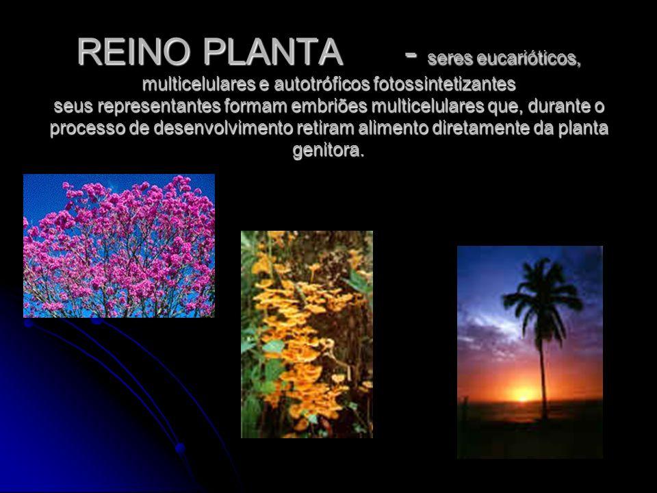 REINO PLANTA- seres eucarióticos, multicelulares e autotróficos fotossintetizantes seus representantes formam embriões multicelulares que, durante o p