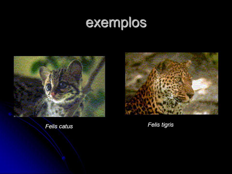 exemplos Felis catus Felis tigris
