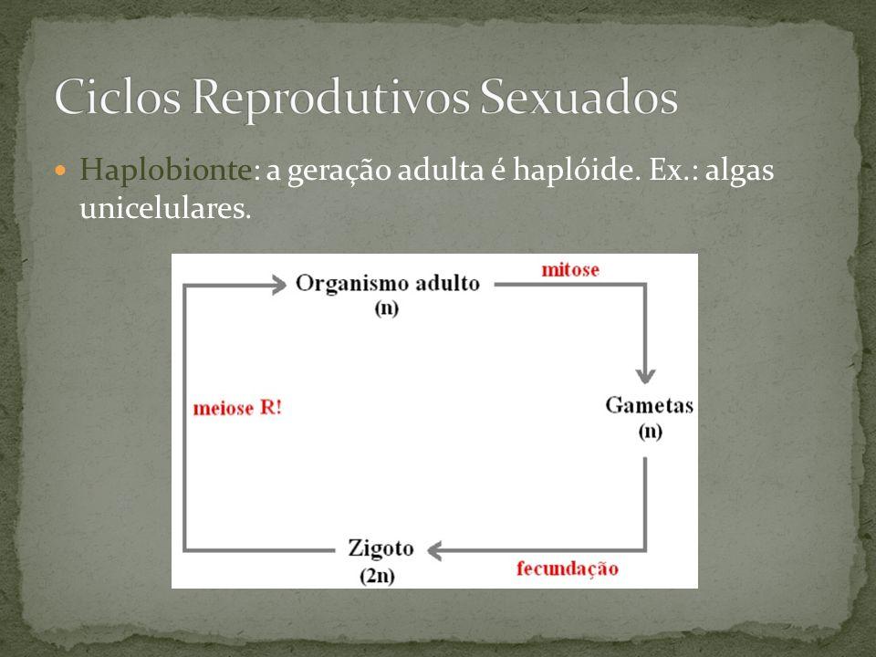 Haplobionte: a geração adulta é haplóide. Ex.: algas unicelulares.