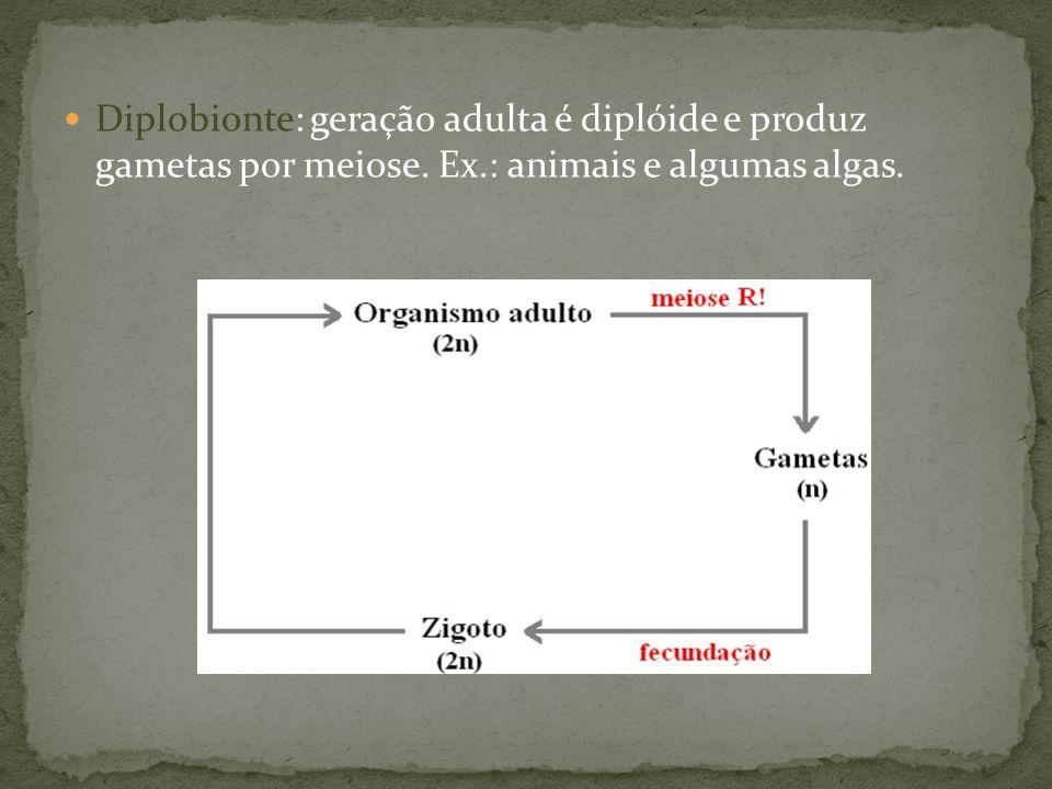 Diplobionte: geração adulta é diplóide e produz gametas por meiose. Ex.: animais e algumas algas.