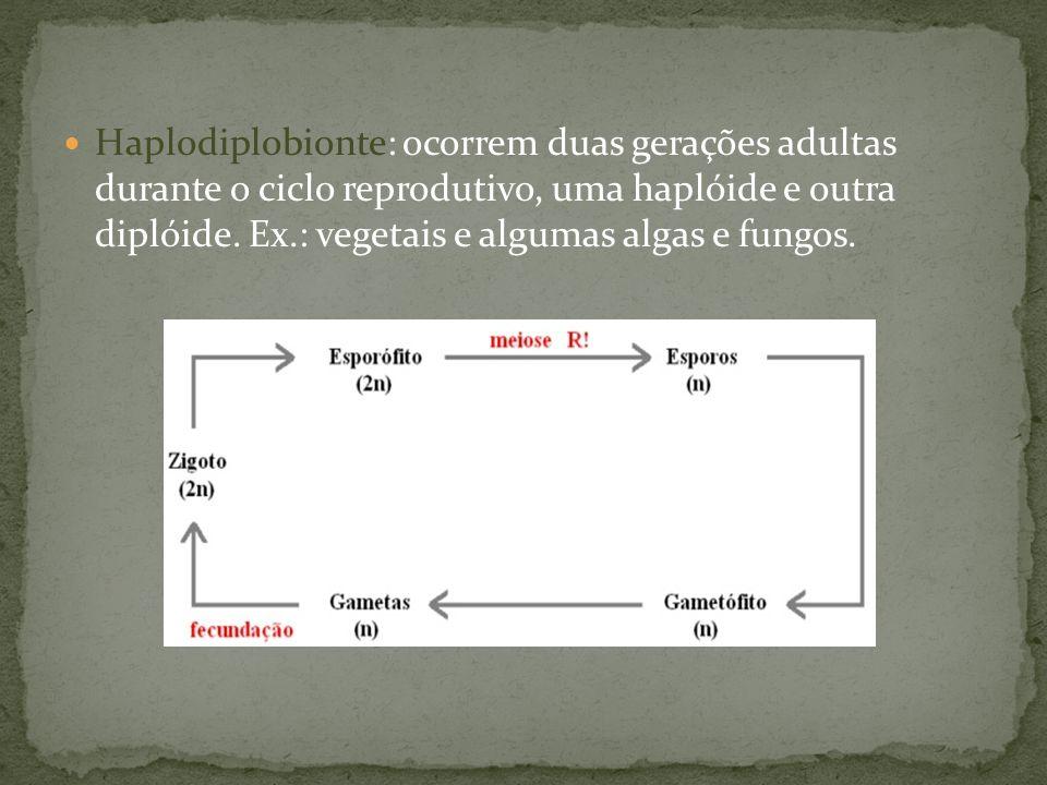 Haplodiplobionte: ocorrem duas gerações adultas durante o ciclo reprodutivo, uma haplóide e outra diplóide. Ex.: vegetais e algumas algas e fungos.