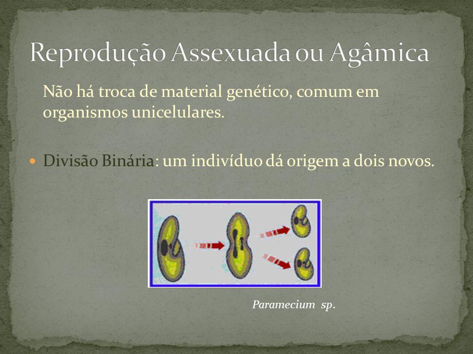 Não há troca de material genético, comum em organismos unicelulares. Divisão Binária: um indivíduo dá origem a dois novos. Paramecium sp.