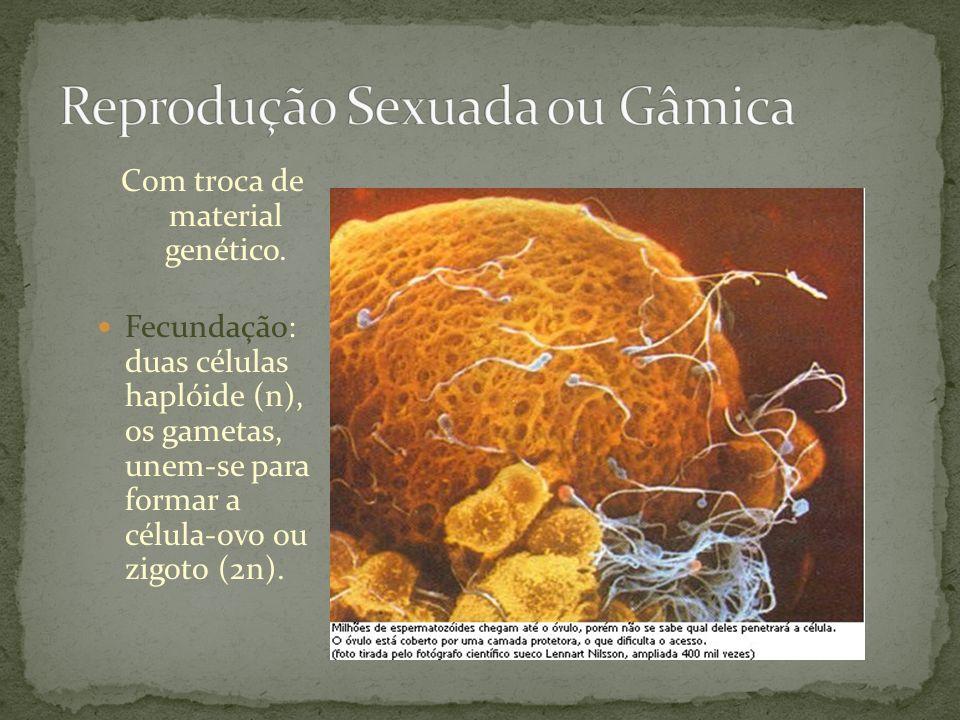 Com troca de material genético. Fecundação: duas células haplóide (n), os gametas, unem-se para formar a célula-ovo ou zigoto (2n).