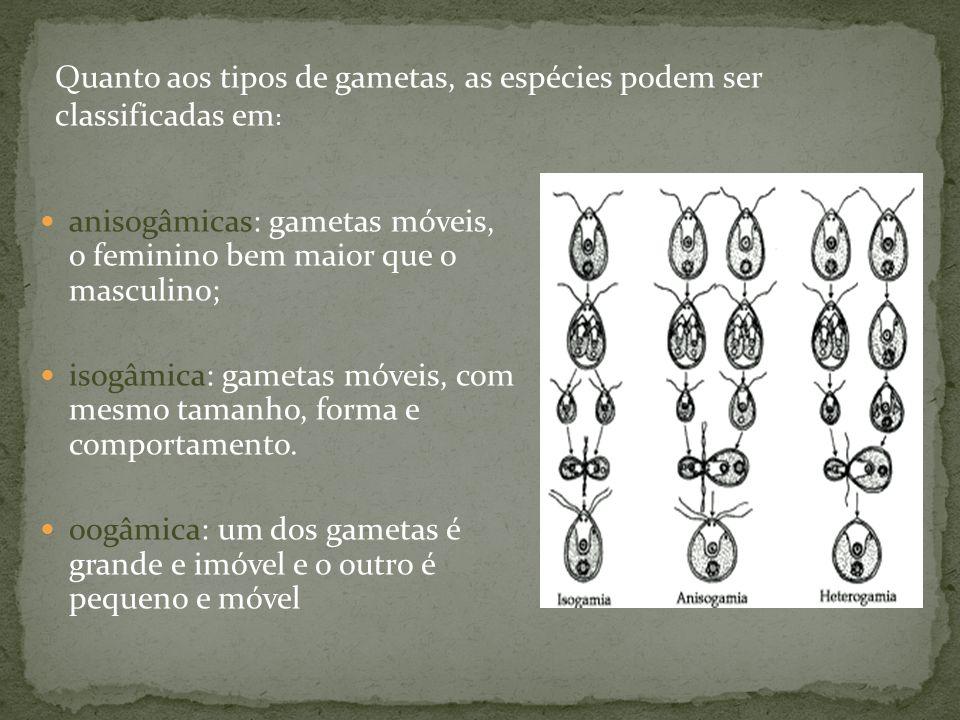 anisogâmicas: gametas móveis, o feminino bem maior que o masculino; isogâmica: gametas móveis, com mesmo tamanho, forma e comportamento. oogâmica: um
