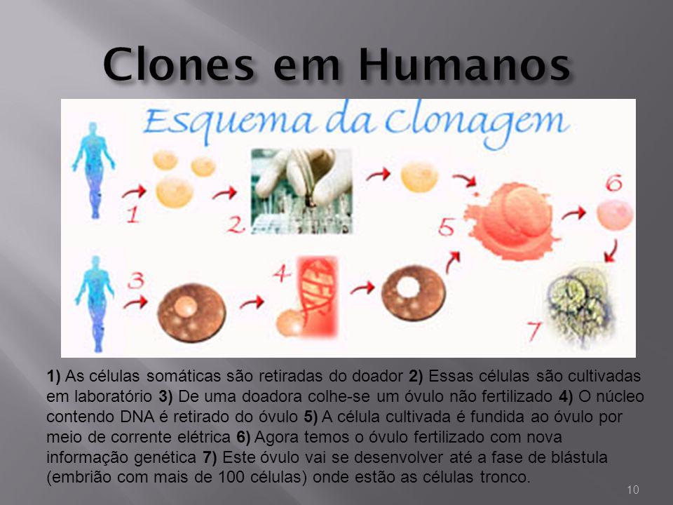 1) As células somáticas são retiradas do doador 2) Essas células são cultivadas em laboratório 3) De uma doadora colhe-se um óvulo não fertilizado 4)