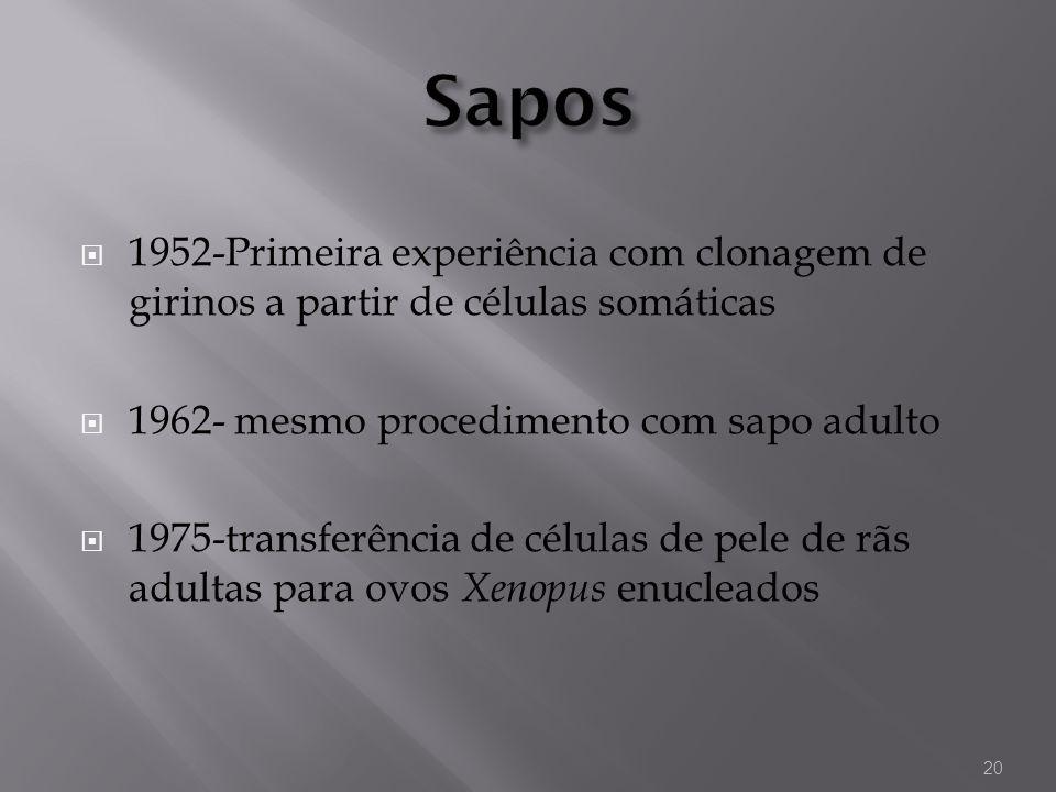 1952-Primeira experiência com clonagem de girinos a partir de células somáticas 1962- mesmo procedimento com sapo adulto 1975-transferência de células