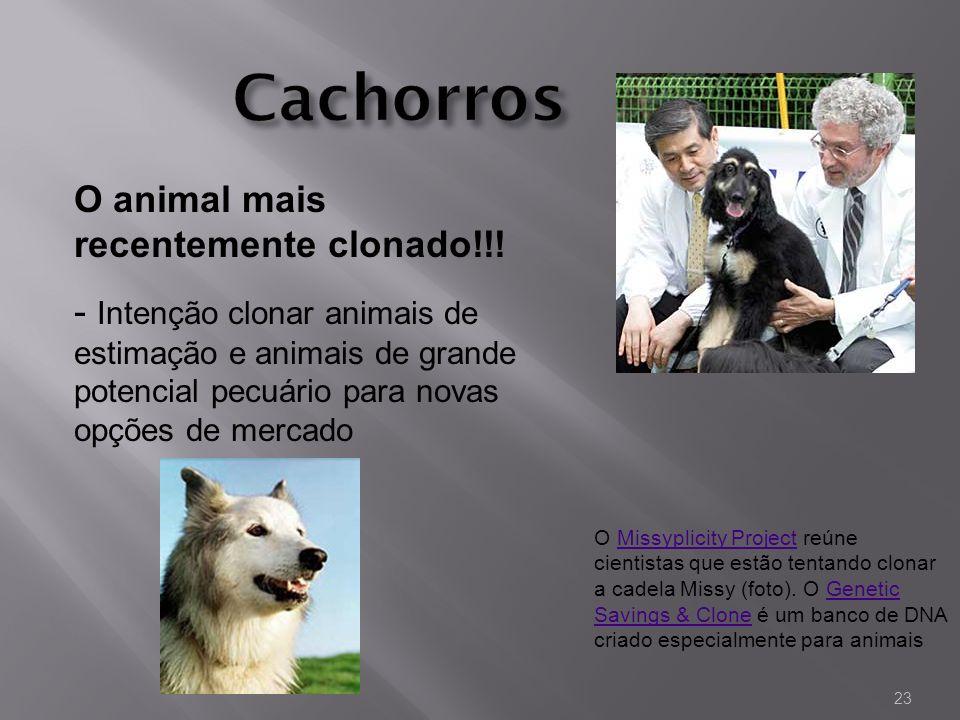 O Missyplicity Project reúne cientistas que estão tentando clonar a cadela Missy (foto). O Genetic Savings & Clone é um banco de DNA criado especialme