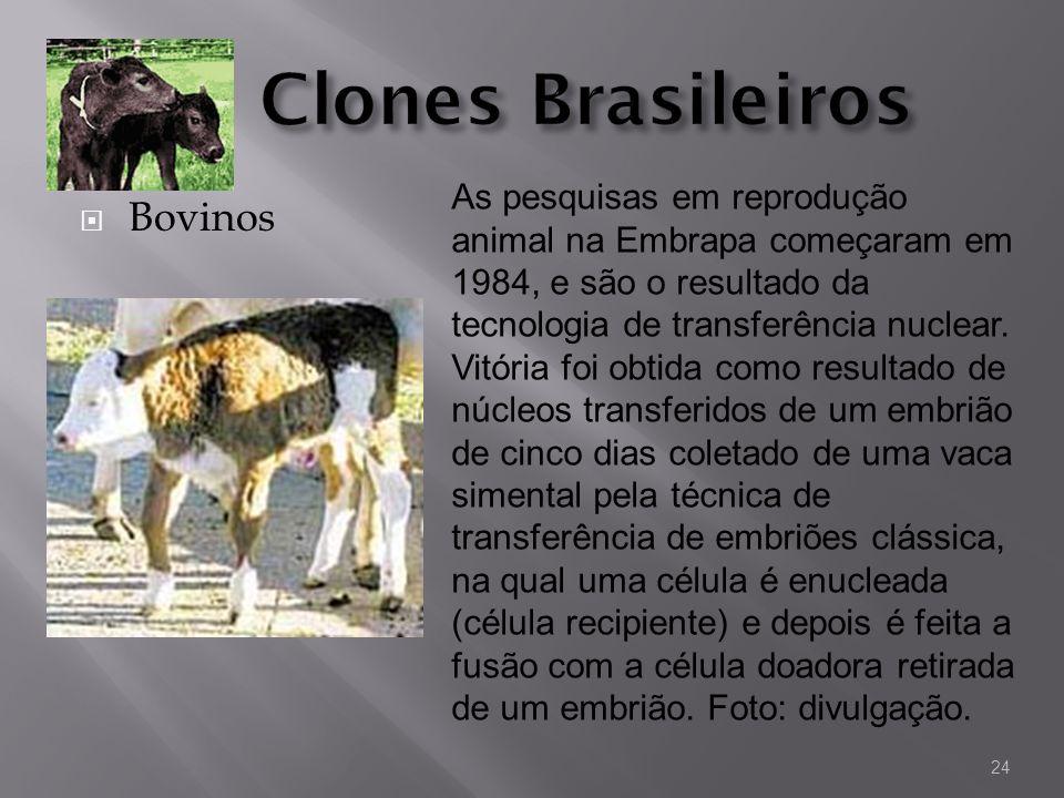 Bovinos As pesquisas em reprodução animal na Embrapa começaram em 1984, e são o resultado da tecnologia de transferência nuclear. Vitória foi obtida c