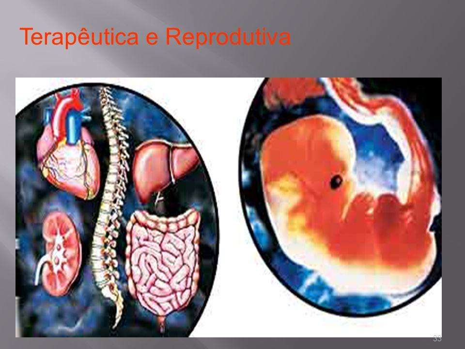 Terapêutica e Reprodutiva 33