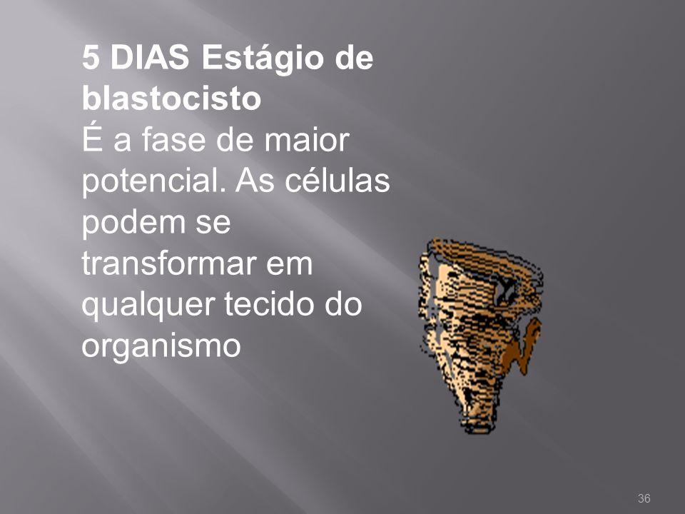 5 DIAS Estágio de blastocisto É a fase de maior potencial. As células podem se transformar em qualquer tecido do organismo 36