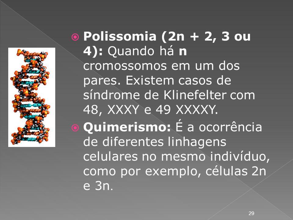 Polissomia (2n + 2, 3 ou 4): Quando há n cromossomos em um dos pares. Existem casos de síndrome de Klinefelter com 48, XXXY e 49 XXXXY. Quimerismo: É