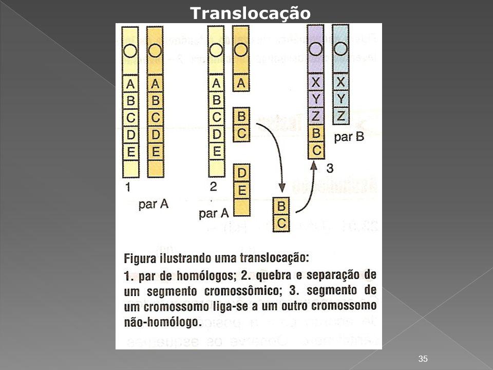 Translocação 35