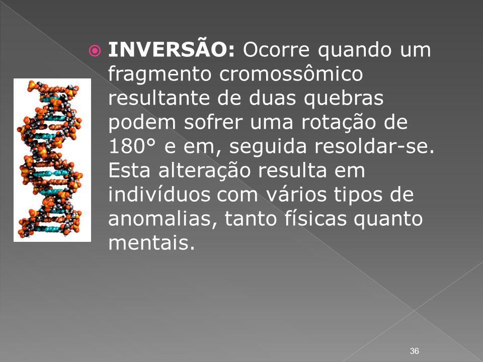 INVERSÃO: Ocorre quando um fragmento cromossômico resultante de duas quebras podem sofrer uma rotação de 180° e em, seguida resoldar-se. Esta alteraçã