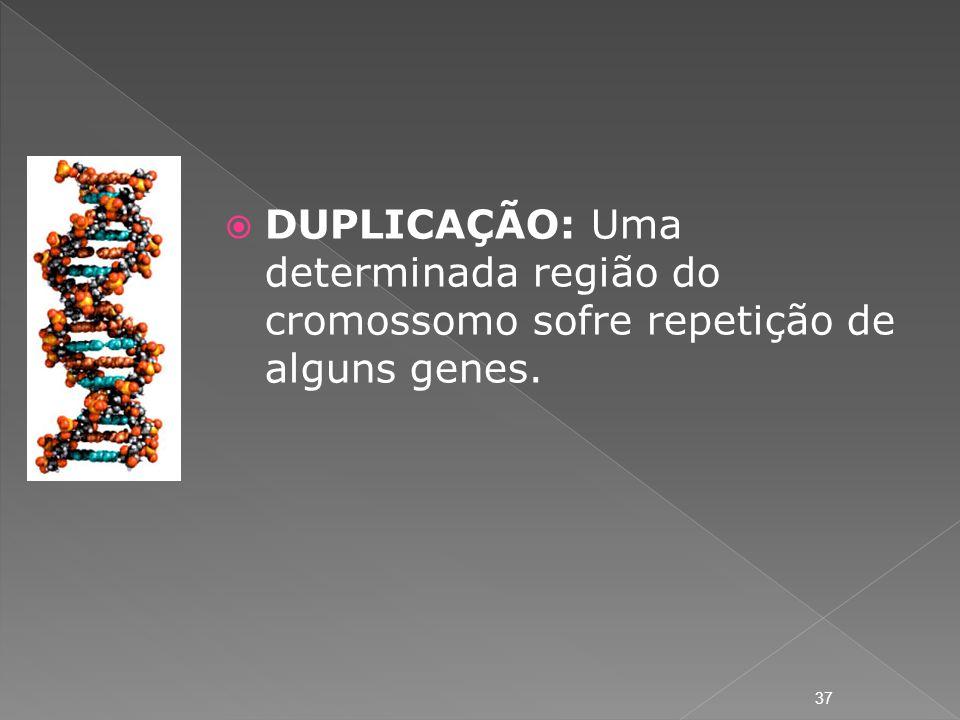 DUPLICAÇÃO: Uma determinada região do cromossomo sofre repetição de alguns genes. 37