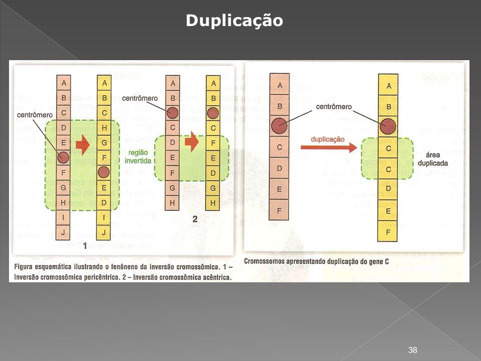 Duplicação 38