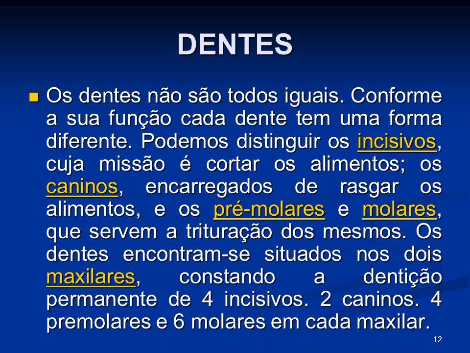 DENTES Os dentes não são todos iguais. Conforme a sua função cada dente tem uma forma diferente.