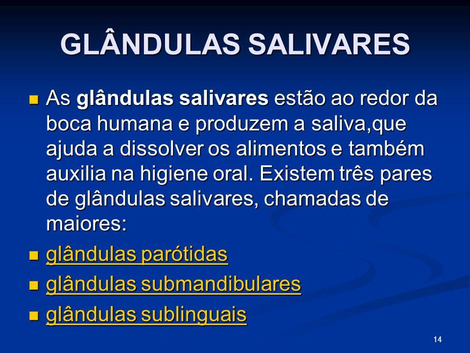 GLÂNDULAS SALIVARES As glândulas salivares estão ao redor da boca humana e produzem a saliva,que ajuda a dissolver os alimentos e também auxilia na higiene oral.