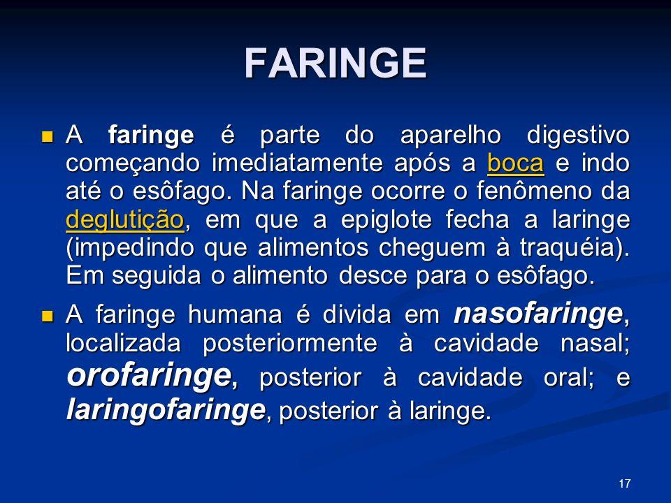 FARINGE A faringe é parte do aparelho digestivo começando imediatamente após a boca e indo até o esôfago.