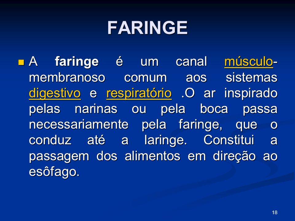 FARINGE A faringe é um canal músculo- membranoso comum aos sistemas digestivo e respiratório.O ar inspirado pelas narinas ou pela boca passa necessariamente pela faringe, que o conduz até a laringe.