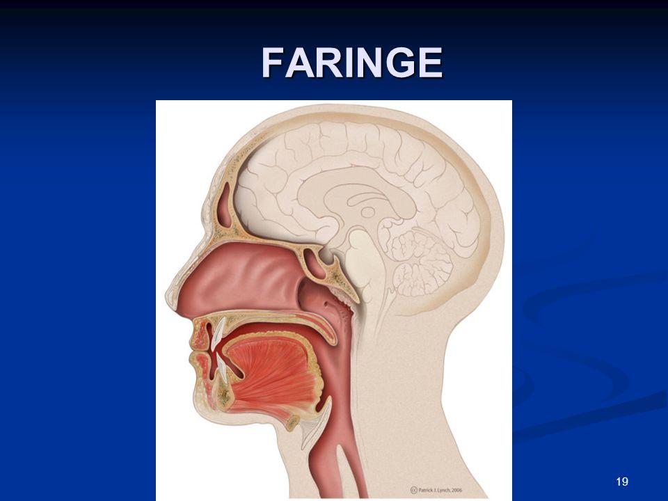 FARINGE FARINGE 19