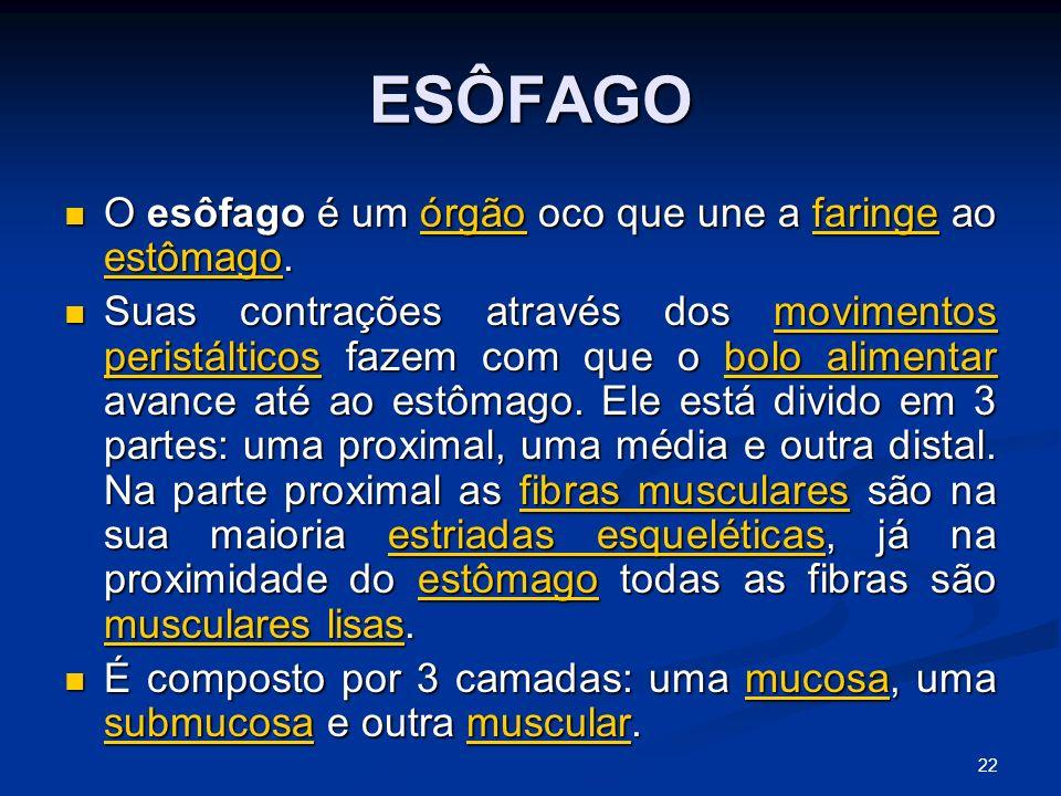 ESÔFAGO O esôfago é um órgão oco que une a faringe ao estômago.