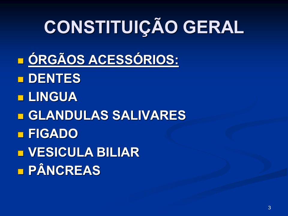 CONSTITUIÇÃO GERAL ÓRGÃOS ACESSÓRIOS: ÓRGÃOS ACESSÓRIOS: DENTES DENTES LINGUA LINGUA GLANDULAS SALIVARES GLANDULAS SALIVARES FIGADO FIGADO VESICULA BILIAR VESICULA BILIAR PÂNCREAS PÂNCREAS 3