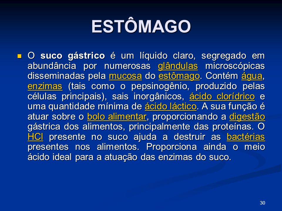 ESTÔMAGO O suco gástrico é um líquido claro, segregado em abundância por numerosas glândulas microscópicas disseminadas pela mucosa do estômago.