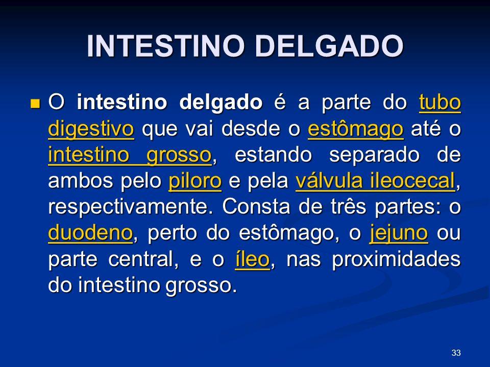 INTESTINO DELGADO O intestino delgado é a parte do tubo digestivo que vai desde o estômago até o intestino grosso, estando separado de ambos pelo piloro e pela válvula ileocecal, respectivamente.