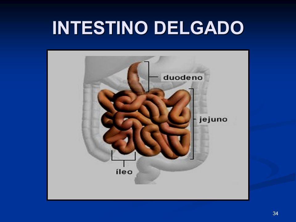 INTESTINO DELGADO 34