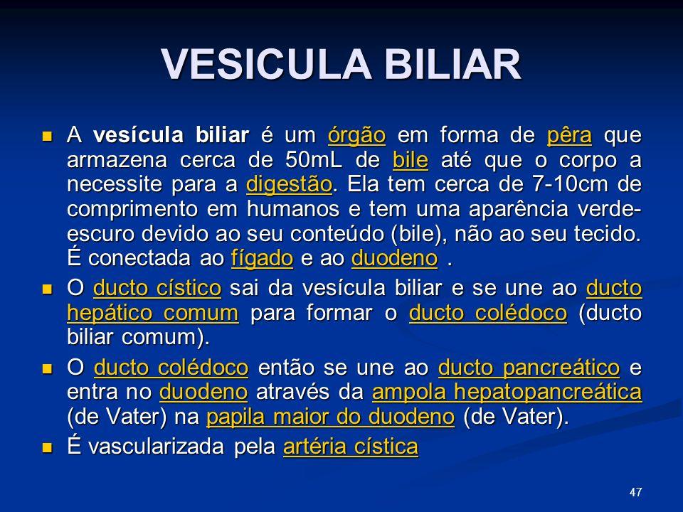 VESICULA BILIAR A vesícula biliar é um órgão em forma de pêra que armazena cerca de 50mL de bile até que o corpo a necessite para a digestão.