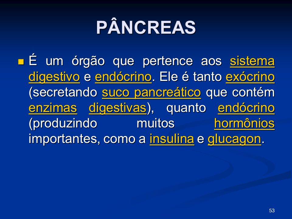 PÂNCREAS É um órgão que pertence aos sistema digestivo e endócrino.