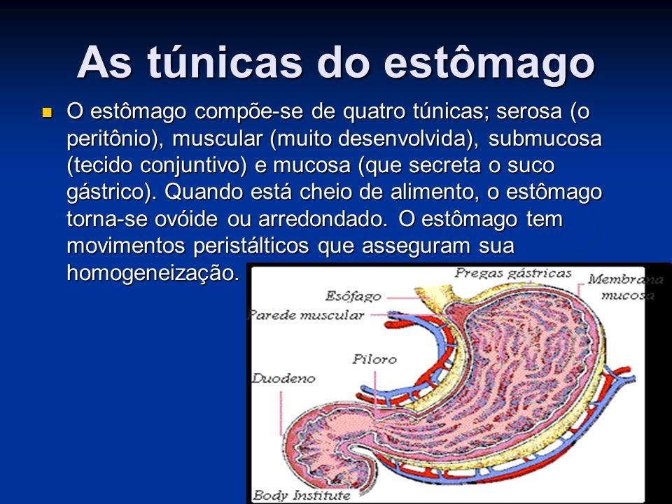 As túnicas do estômago O estômago compõe-se de quatro túnicas; serosa (o peritônio), muscular (muito desenvolvida), submucosa (tecido conjuntivo) e mucosa (que secreta o suco gástrico).