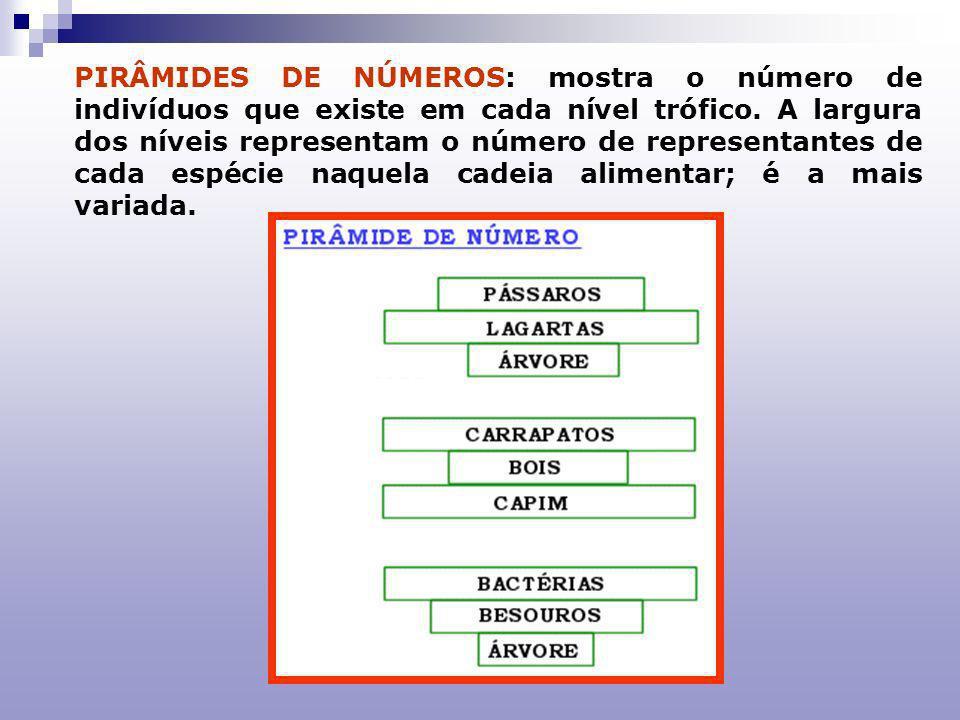 PIRÂMIDES DE BIOMASSA:são representadas, em cada nível, pelo peso seco consumido numa cadeia alimentar e expressa a quantidade de matéria orgânica por área.