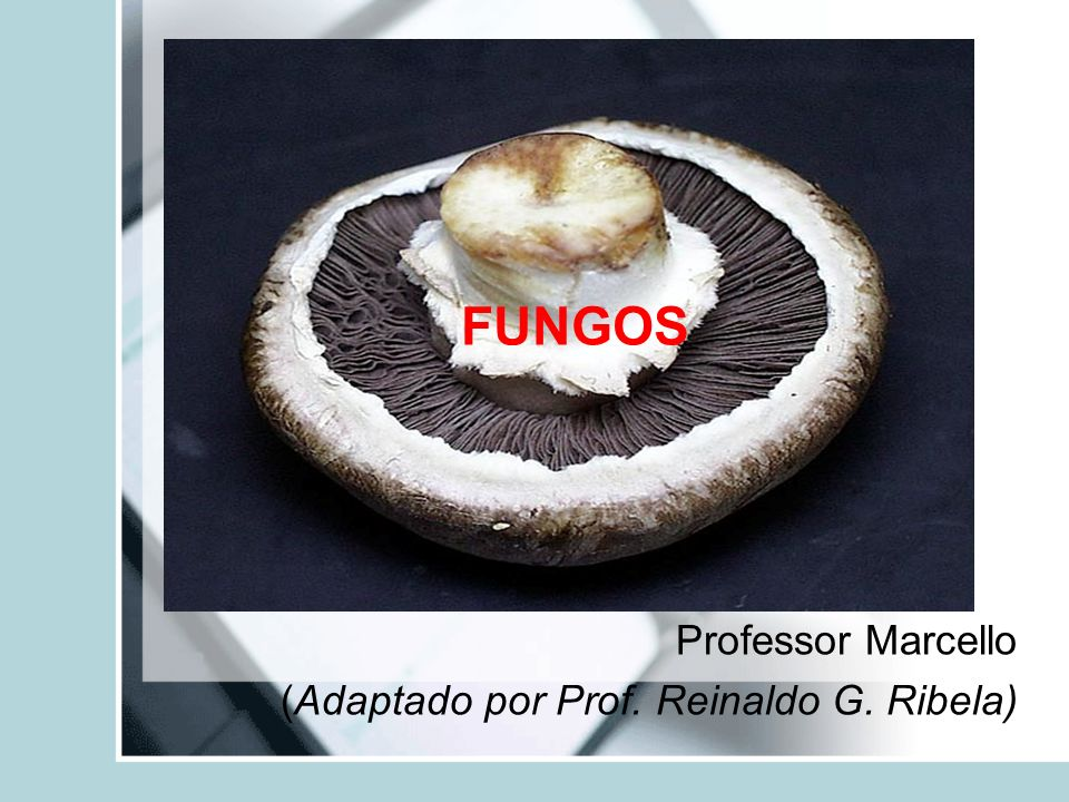 FUNGOS Professor Marcello (Adaptado por Prof. Reinaldo G. Ribela)