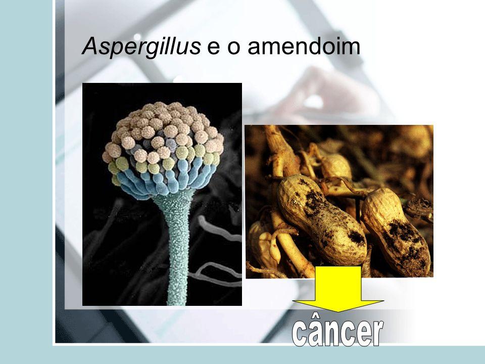 Aspergillus e o amendoim