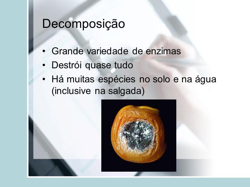 Decomposição Grande variedade de enzimas Destrói quase tudo Há muitas espécies no solo e na água (inclusive na salgada)