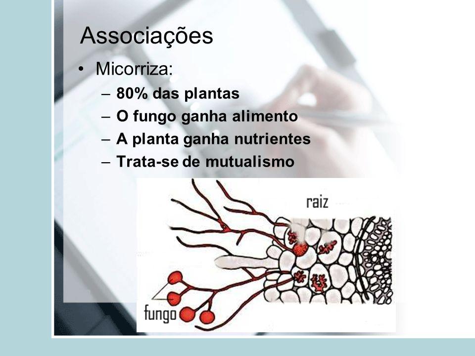 Associações Micorriza: –80% das plantas –O fungo ganha alimento –A planta ganha nutrientes –Trata-se de mutualismo