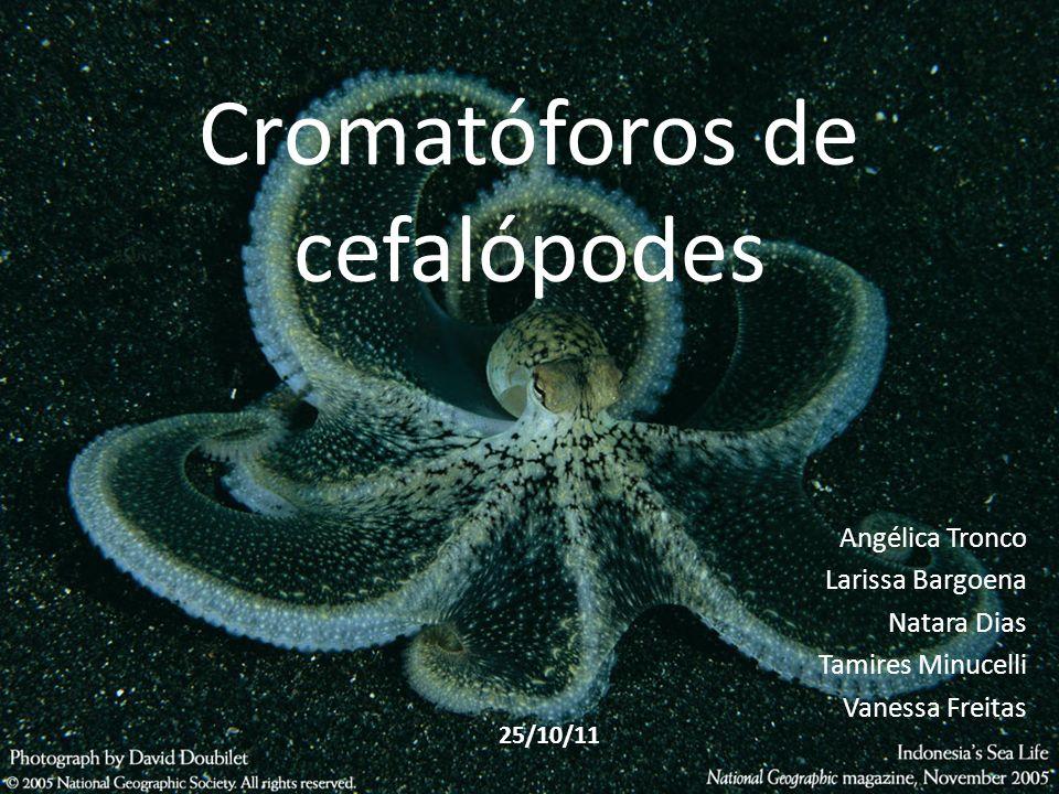 Cromatóforos de cefalópodes Angélica Tronco Larissa Bargoena Natara Dias Tamires Minucelli Vanessa Freitas 25/10/11