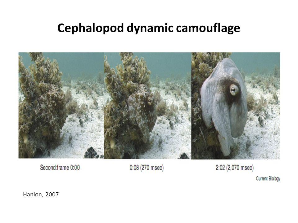 Cephalopod dynamic camouflage Hanlon, 2007
