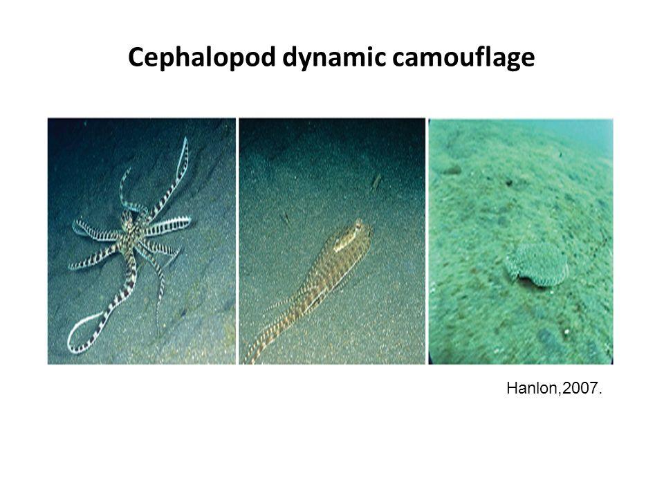 Cephalopod dynamic camouflage Hanlon,2007.