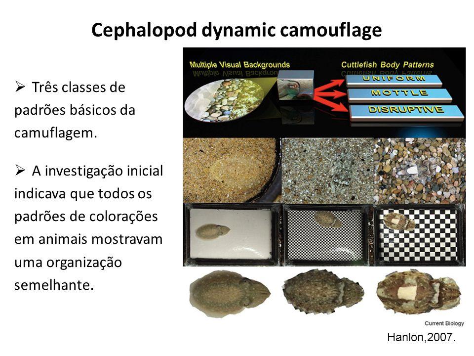 Cephalopod dynamic camouflage Três classes de padrões básicos da camuflagem. A investigação inicial indicava que todos os padrões de colorações em ani