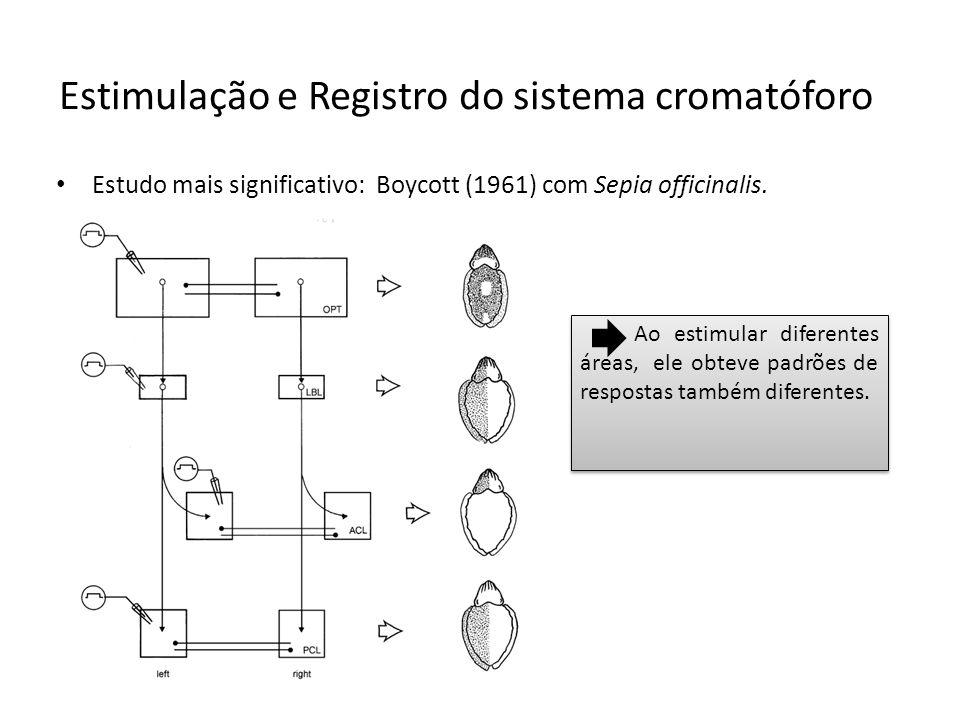 Estudo mais significativo: Boycott (1961) com Sepia officinalis. Estimulação e Registro do sistema cromatóforo Ao estimular diferentes áreas, ele obte