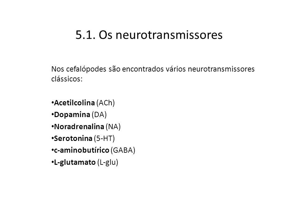 5.1. Os neurotransmissores Nos cefalópodes são encontrados vários neurotransmissores clássicos: Acetilcolina (ACh) Dopamina (DA) Noradrenalina (NA) Se