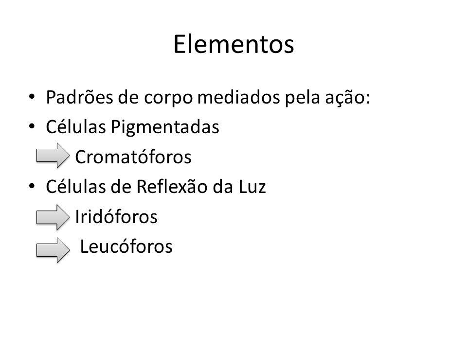 Elementos Padrões de corpo mediados pela ação: Células Pigmentadas - Cromatóforos Células de Reflexão da Luz - Iridóforos - Leucóforos