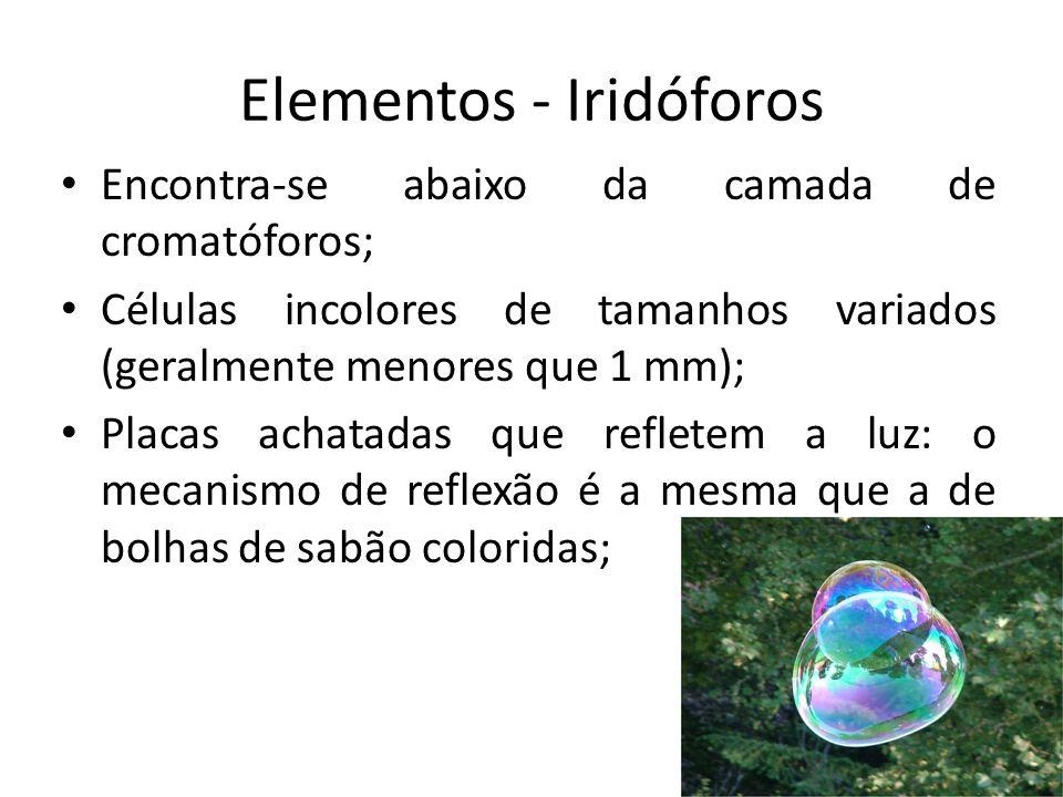 Elementos - Iridóforos Encontra-se abaixo da camada de cromatóforos; Células incolores de tamanhos variados (geralmente menores que 1 mm); Placas acha