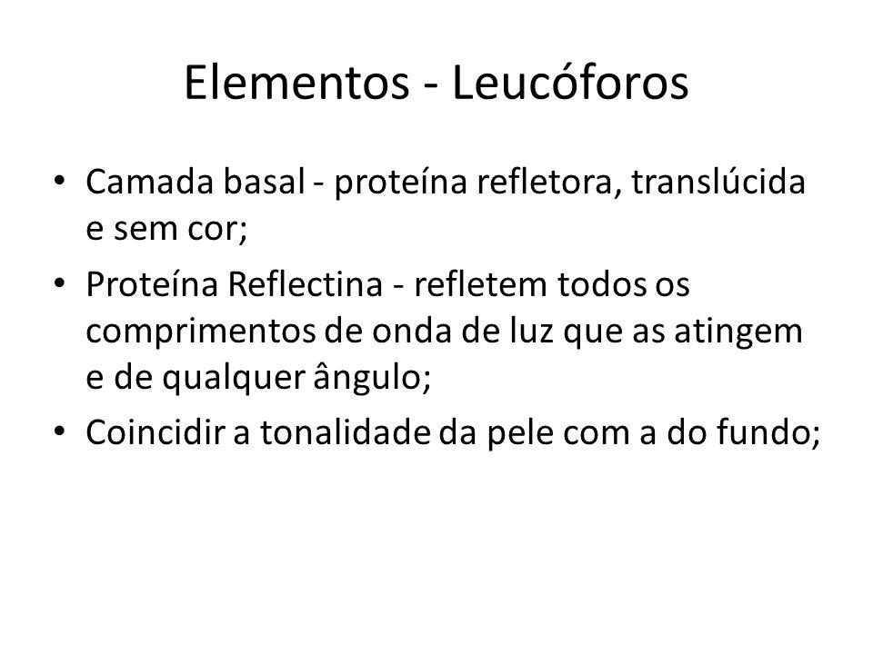 Elementos - Leucóforos Camada basal - proteína refletora, translúcida e sem cor; Proteína Reflectina - refletem todos os comprimentos de onda de luz q