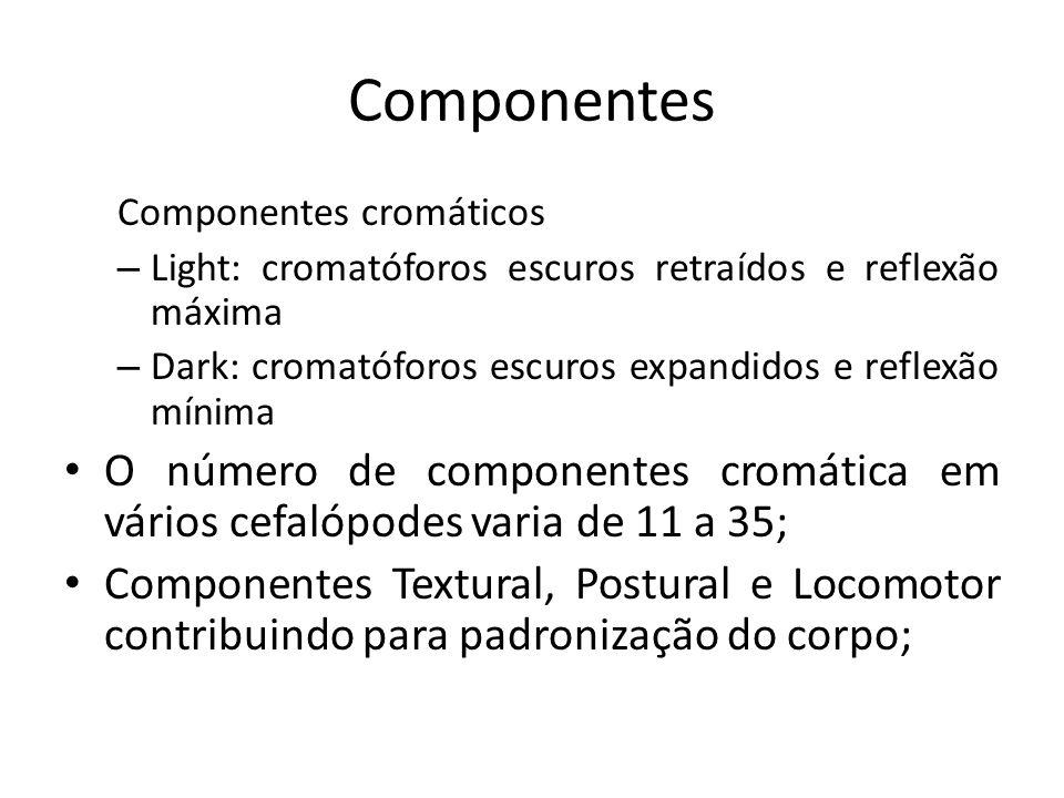 Componentes Componentes cromáticos – Light: cromatóforos escuros retraídos e reflexão máxima – Dark: cromatóforos escuros expandidos e reflexão mínima