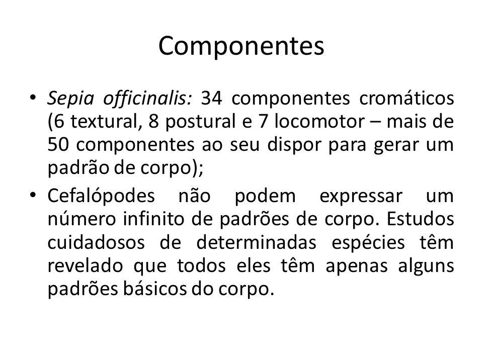 Componentes Sepia officinalis: 34 componentes cromáticos (6 textural, 8 postural e 7 locomotor – mais de 50 componentes ao seu dispor para gerar um pa