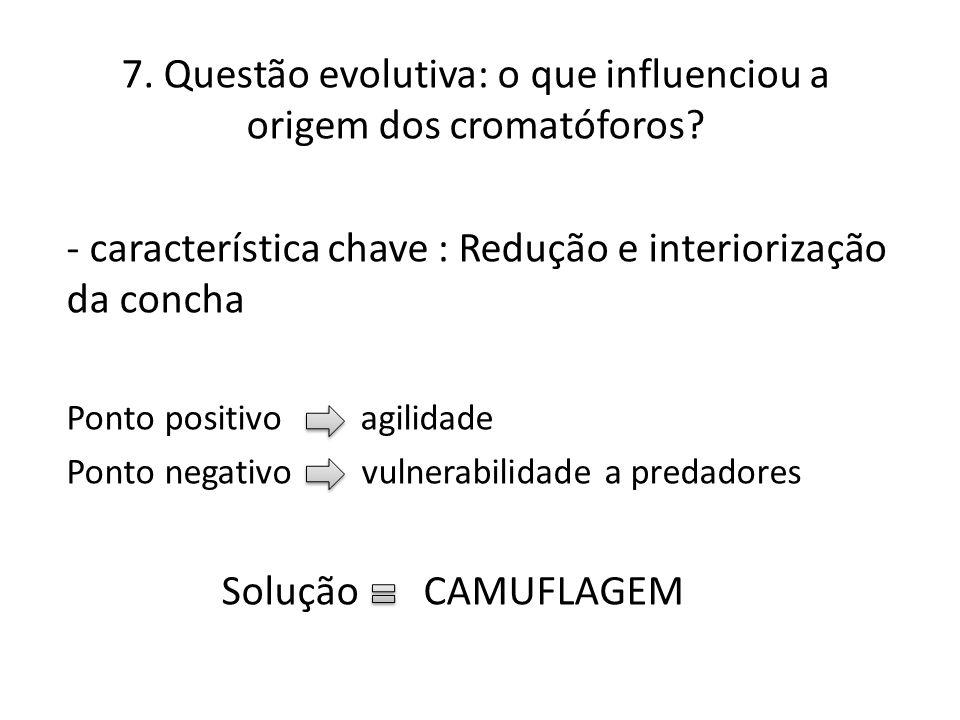 7. Questão evolutiva: o que influenciou a origem dos cromatóforos? - característica chave : Redução e interiorização da concha Ponto positivo agilidad