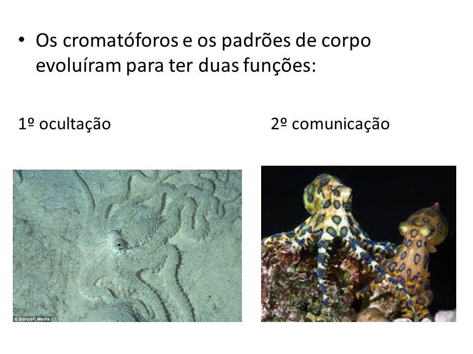 Os cromatóforos e os padrões de corpo evoluíram para ter duas funções: 1º ocultação 2º comunicação